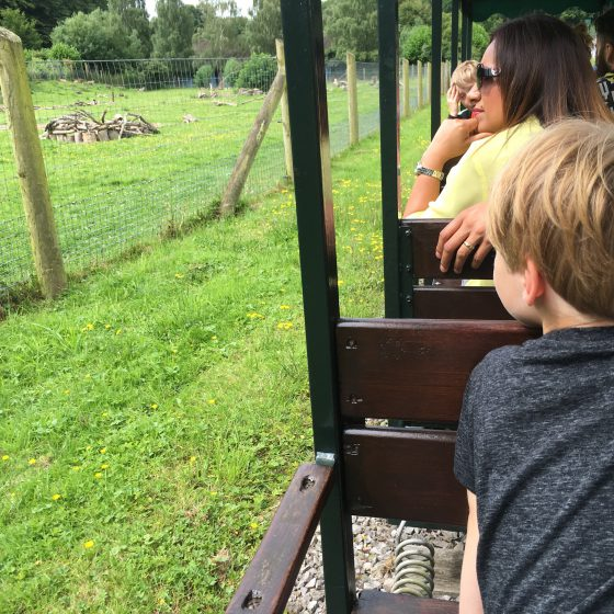the Marwell Zoo train