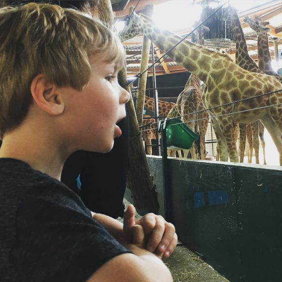 Boy and giraffe at Marwell Zoo