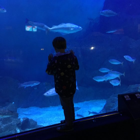 boy at aqaurium